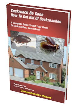Cockroach Be Gone - A Complete Guide To Rid Your Home Of Cockroaches